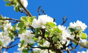 Kako Začeti s Pomladnim Razstrupljanjem