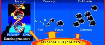 Beljakovine za Življenje in Smrt – Dr.Iztok Ostan v Živo