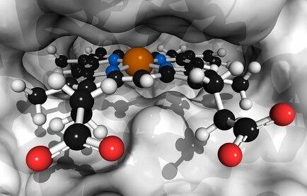 Hemoglobin (človeški, Hb) proteinska molekula