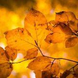 Koraki v zlato jesen