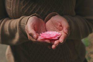Lotosov cvet