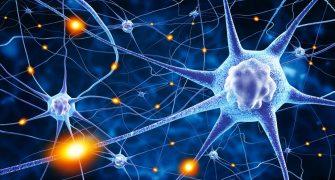 Večji odmerki FHES podaljšujejo življenje celic