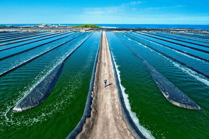 Proizvodnja naravne Spiruline na Havajih