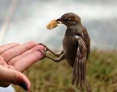 Vrabec v roki
