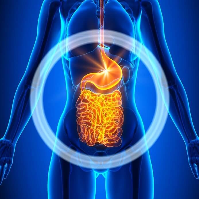 Zdravje izvira iz črevesja