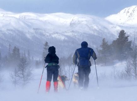 Zimski sprehod s psi